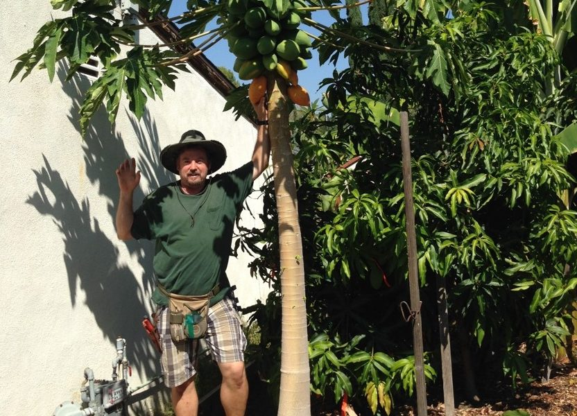 Alexander Silber Of Papaya Tree Nursery